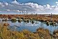 Moorsee im Goldenstedter Moor im Herbst.jpg
