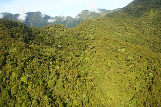 New Guinea - Mount Bosavi