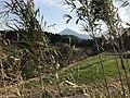 Mount Kirishima from train near Nishi-Kobayashi Station.jpg