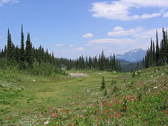 Mount Revelstoke National Park - Meadow near the summit