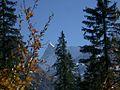 Mountain forest and Finsteraarhorn.jpg