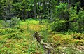 Mountaintop Bog (1) (9341208604).jpg