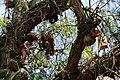 Muñecas junto a ramas.JPG