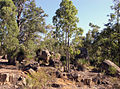 Mundaring Weir National Park SMC.jpg