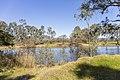 Murray River on Gateway Island, looking towards NSW.jpg