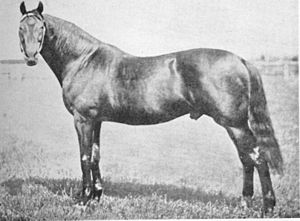 Musket (horse) - Image: Musket (GB)