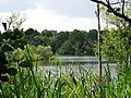 Mytchett Lake - geograph.org.uk - 1425379.jpg