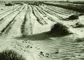 NRCSKS01001 - Kansas (4181)(NRCS Photo Gallery).tif