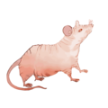 NUDE-MOUSE.png