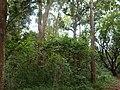Nairobi Arboretum Park 31.JPG