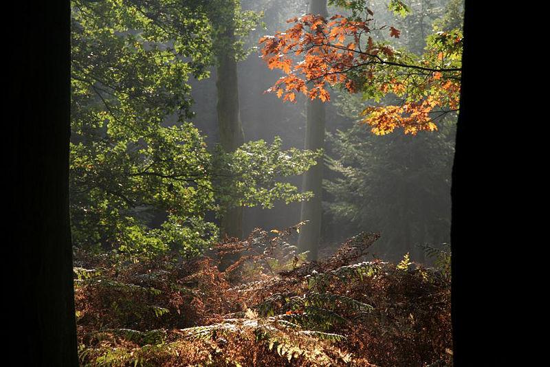Bestand:Najaarszon op hefstbos.jpg