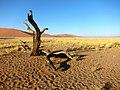Namib Desert (6486765397).jpg