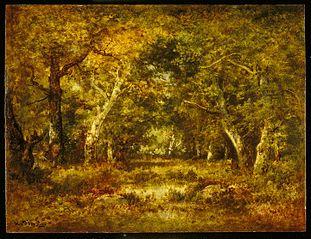 Autumn, Forest Interior