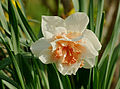 Narcisse double FR 2013.jpg