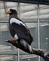 National Aviary (13020200703).jpg