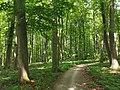 Nationalpark Hainich craulaer Kreuz 2020-06-03 17.jpg