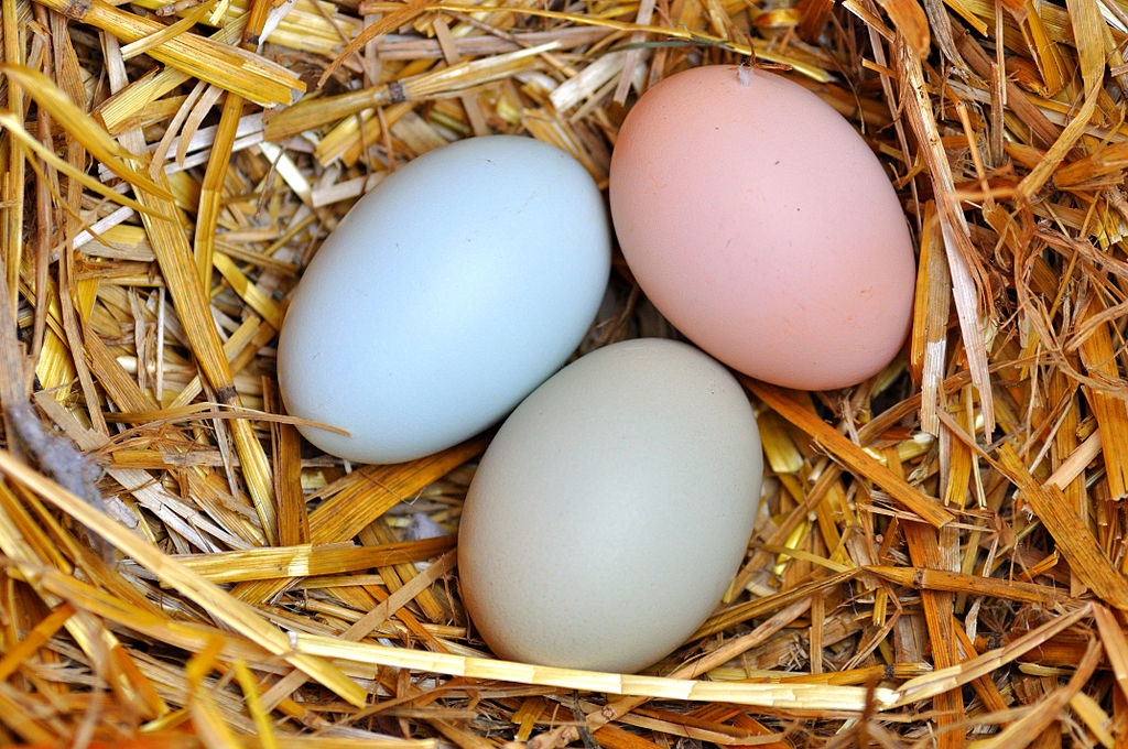 Natural Colored Chicken Eggs