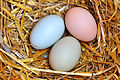 Natural Easter Colored Eggs.jpg