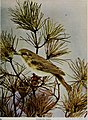 Nature neighbors, embracing birds, plants, animals, minerals, in natural colors by color photography, containing articles by Gerald Alan Abbott, Dr. Albert Schneider, William Kerr Higley...and other (14727813826).jpg