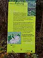 Naturwaldreservat - Staatswald Kyburg.jpg