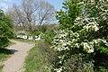 Natuur nabij wisentenuitkijkpunt P1140282.jpg