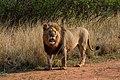 Nkomazi Game Reserve, South Africa (22664007411).jpg