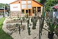 Nyíregyháza Zoo, succulents-8.jpg