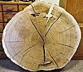 Oak-soling-400a hg.jpg