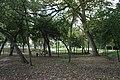 Oak Cliff Founders Park September 2016 10.jpg