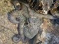 Octopus-2005.JPG