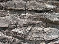 Old grey palm tree trunk closeup pattern.jpg