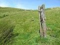 Old post but no gate, near Nantymaen, Ceredigion - geograph.org.uk - 901517.jpg