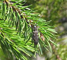 Ontario Beetle - topview.jpg