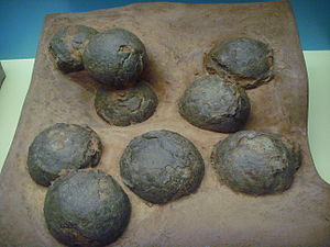 Egg fossil - Oolithes spheroides