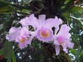 Orquídeas en el patio de alguna casa supateña.jpg