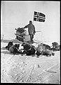 Oscar Wisting med hundespannet sitt på Sydpolen, 14.12.1911 (7635391048).jpg