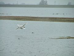 Ouse Washes at Welney.jpg