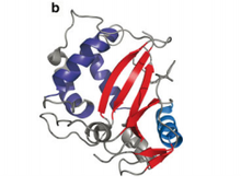 Overall structure of RNase T2 proteins.png