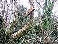 Owl tube - geograph.org.uk - 689076.jpg