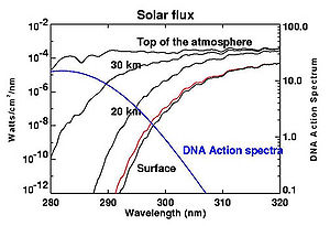 Ozone layer - UV-B energy levels at several altitudes. Blue line shows DNA sensitivity. Red line shows surface energy level with 10 percent decrease in ozone