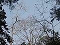 P13 Lawachara National Park, In Moulovibajar, Bangladesh.jpg