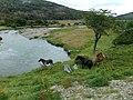 PN Tierra del Fuego 30.jpg