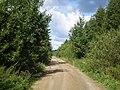 Pašušvio miškas 1.jpg