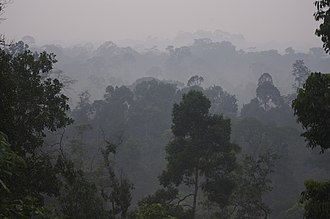 Johor - Panti Forest in Kota Tinggi District.