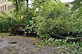 Park Sienkiewicza in Łódź after storm on July 20th, 2011, 07.jpg