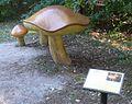 Park grzybowy w Pilce (Suillus grevillei).JPG