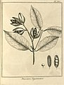 Passoura guianensis Aublet 1775 pl 380.jpg