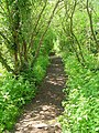 Path through Dingle Dell - geograph.org.uk - 793323.jpg