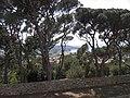Paysage (Saint-Tropez) (1).jpg