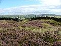 Pennine Way near Mount Pleasant - geograph.org.uk - 537383.jpg